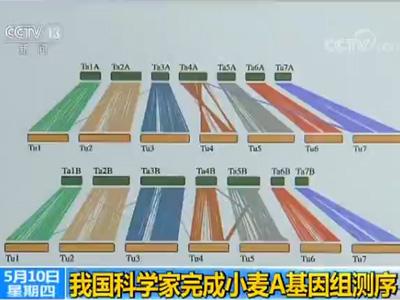 我国科学家完成小麦A基因组测序楚天斗地主1.3