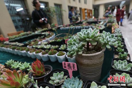 资料图:多肉植物。<a target='_blank' href='http://www.chinanews.com/'><p  align=