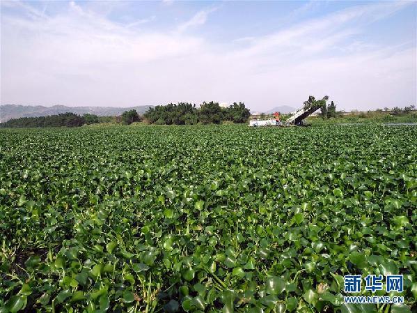 """(图文互动)(4)""""白练""""变""""黑龙"""",江河变""""草原""""--粤东母亲河为何污染20多年难治理?"""