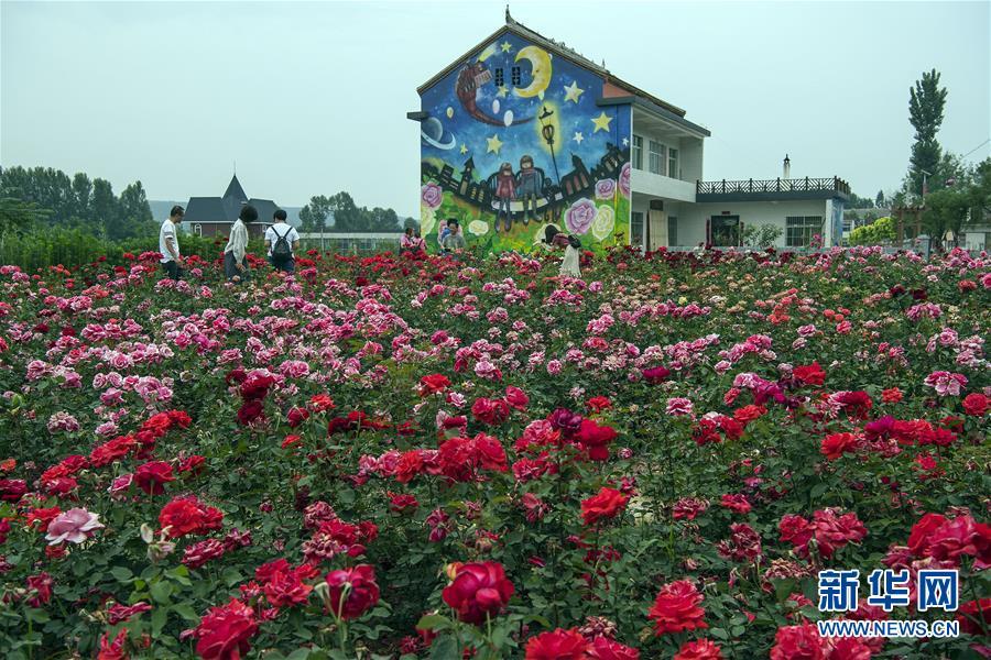 小镇中有玫瑰广场,玫瑰长廊,木屋风情酒店,特色商业街区,水上乐园等