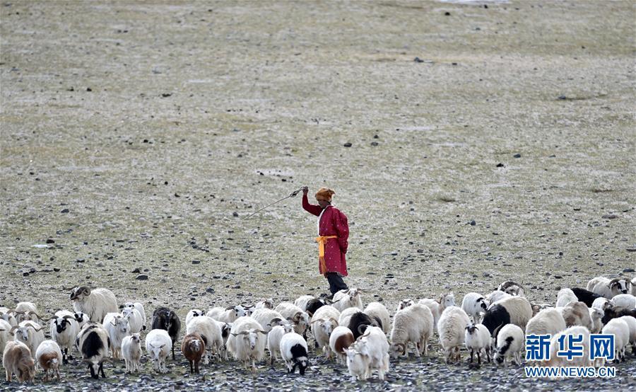 (新华全媒头条·图文互动)(6)跨越千里的远行——西藏首批高海拔地区群众生态搬迁实录