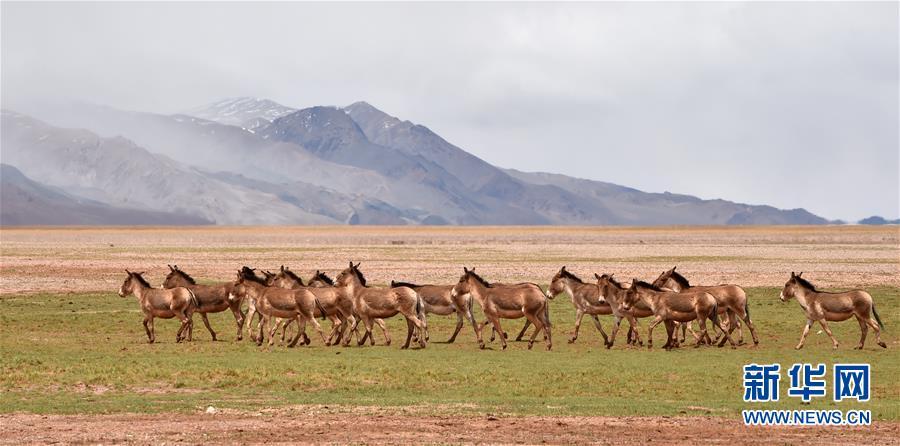 (新华全媒头条·图文互动)(9)跨越千里的远行——西藏首批高海拔地区群众生态搬迁实录
