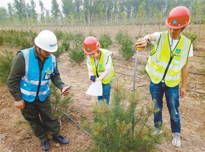 """雄安新区精心营造近自然森林:每棵树都有""""身份证"""""""