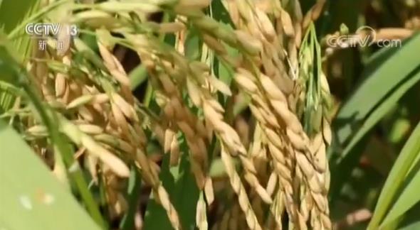 我国农业农村经济稳中向优 一二三产业融合发展农民受益文胸搭扣的反面