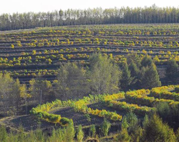 全县林地面积112万亩,森林覆盖率19.7%.