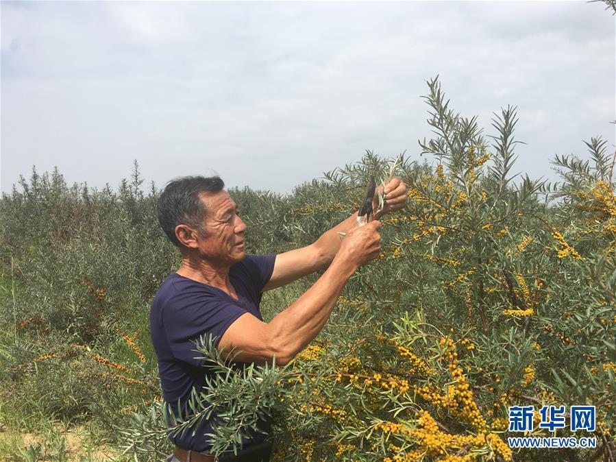 (新华全媒头条·在习近平新时代中国特色社会主义思想指引下——新时代新作为新篇章·图文互动)(9)绿富同兴画卷在沙海中铺展——库布其沙漠生态治理纪实
