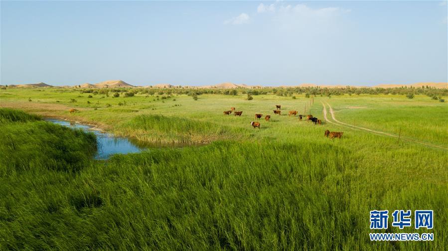 内蒙古杭锦旗位于库布其沙漠中的生态修复景观(7月11日无人机拍摄)。 新华社记者 彭源