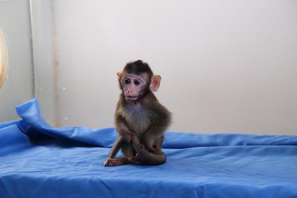 我科学家首揭灵长类动物发育和寿命调控的关键通路