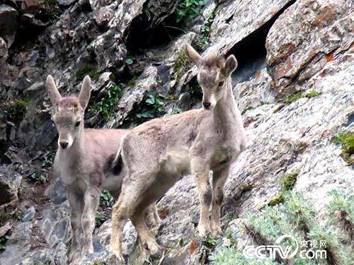 久美扎西拍攝的野生動物。