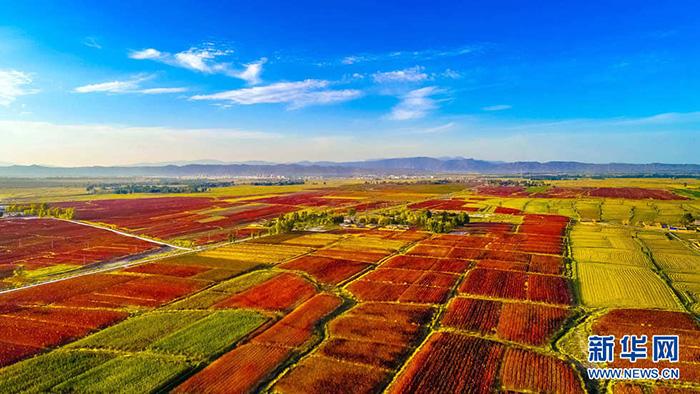 秋收的中国,你想象不到的美!但更美的是……