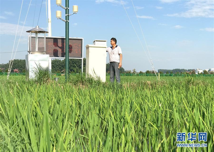 (新华全媒头条·图文互动)(4)最年轻的节日 最悠久的牵念——写给首个中国农民丰收节