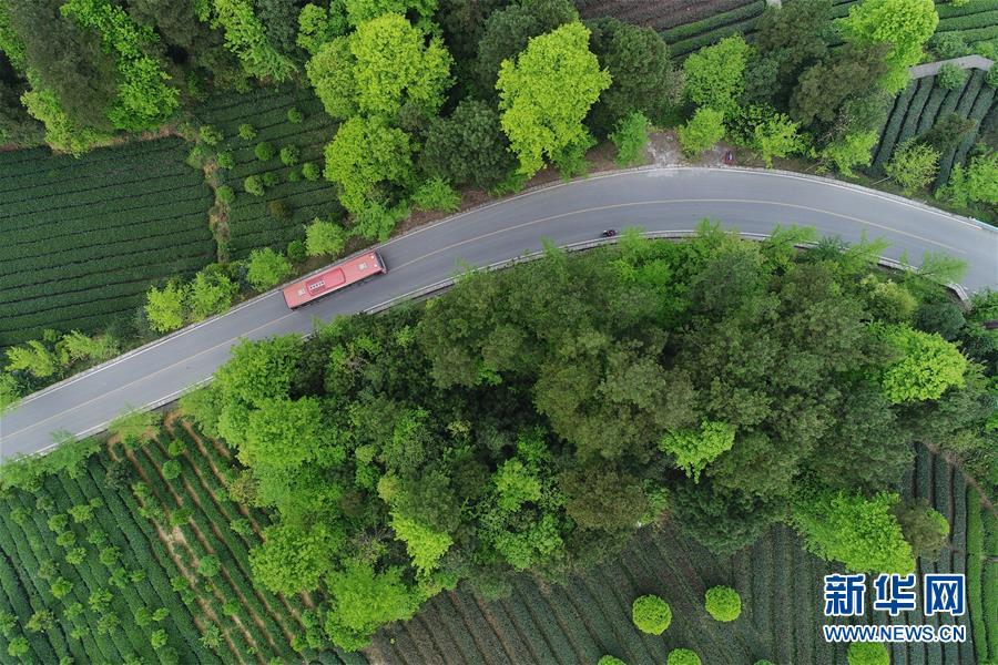 (新华全媒头条·图文互动)(6)希望洒在金色田野——写在乡村振兴战略实施一周年之际