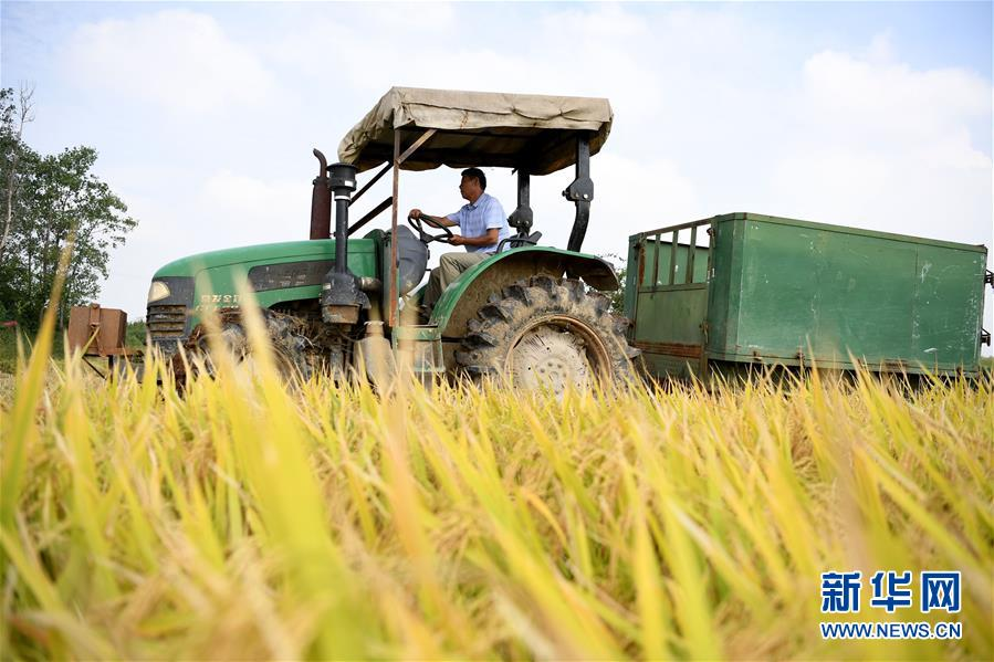 (新华全媒头条·图文互动)(7)希望洒在金色田野——写在乡村振兴战略实施一周年之际