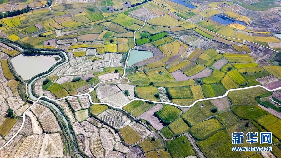(新华全媒头条·图文互动)(8)希望洒在金色田野——写在乡村振兴战略实施一周年之际