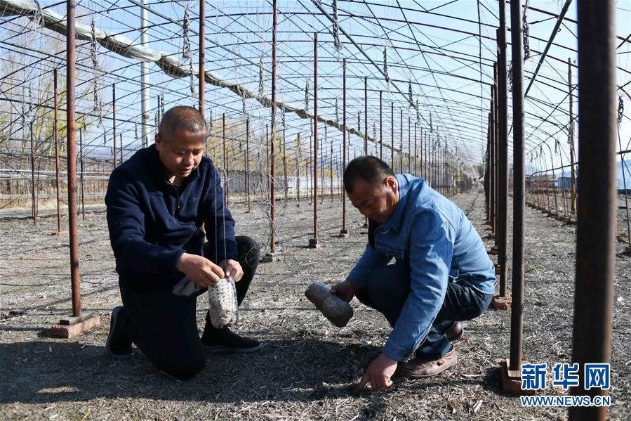 (百城百县百企调研行·图文互动)(9)瞧瞧这些村咋富起来的——黑龙江省牡丹江市发展特色精品农业促农增收