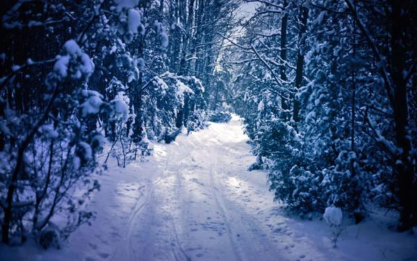 今日大雪|在最美的诗词里,遇见最美的雪景