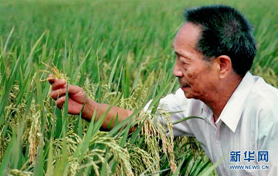 """(改革先锋风采·图文互动)(1)一颗稻谷的""""中国贡献""""——袁隆平的追梦路"""