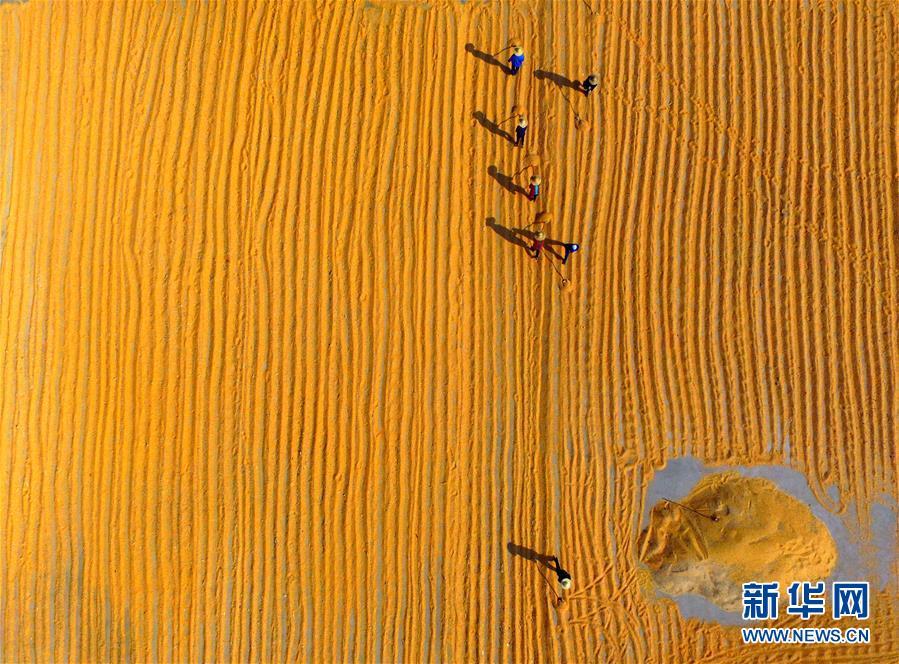 (新华全媒头条·图文互动)(6)在实现农业农村现代化征程上迈出新步伐——专家解读中央农村工作会议精神