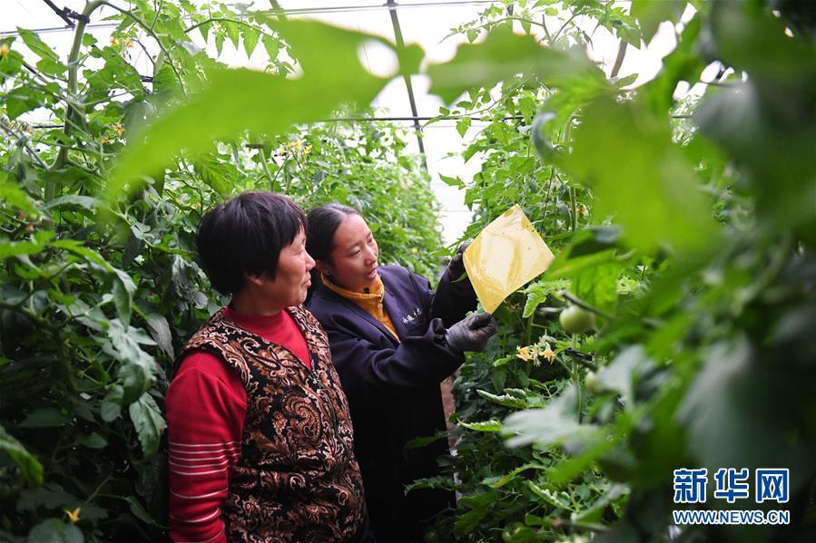 (新华全媒头条·图文互动)(7)在实现农业农村现代化征程上迈出新步伐——专家解读中央农村工作会议精神
