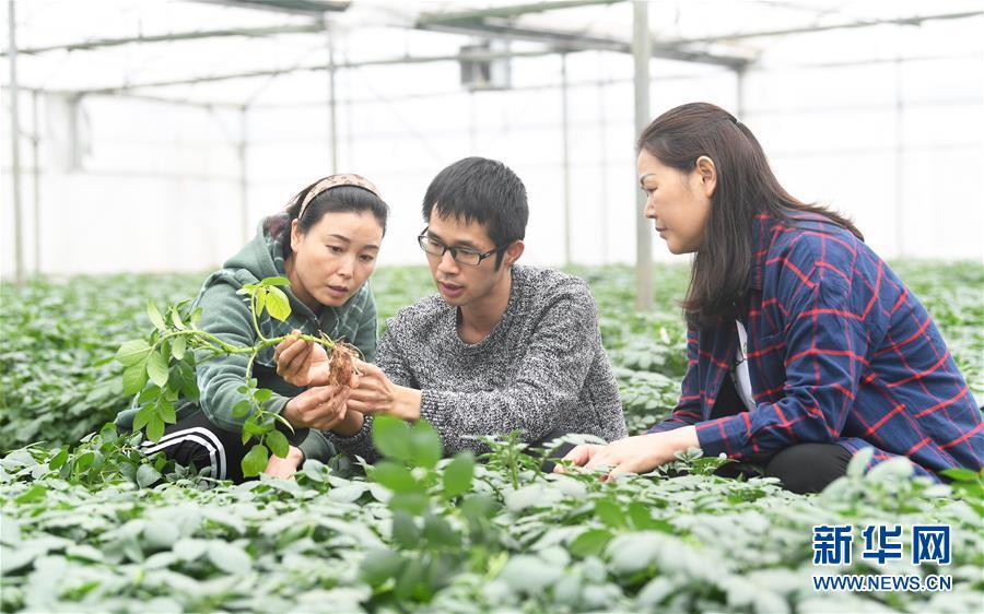 (新华全媒头条·图文互动)(8)在实现农业农村现代化征程上迈出新步伐——专家解读中央农村工作会议精神