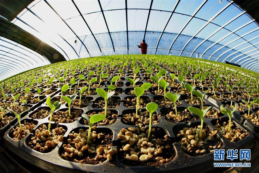 (新华全媒头条·图文互动)(10)在实现农业农村现代化征程上迈出新步伐——专家解读中央农村工作会议精神