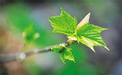 氣候變暖致植物生長季延長? 2000年后停止