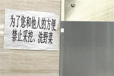 """挖野菜大军涌入公园""""掐尖儿"""" 工作人..."""