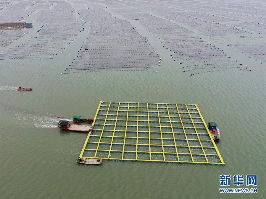 (社会)(1)福建霞浦:加快海上养殖综合整治