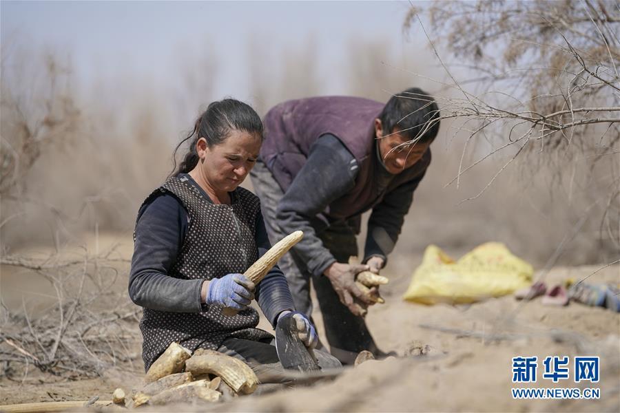 """(新华全媒头条·图文互动)(6)一步千年,""""最后的沙漠部落""""迁入新家园"""