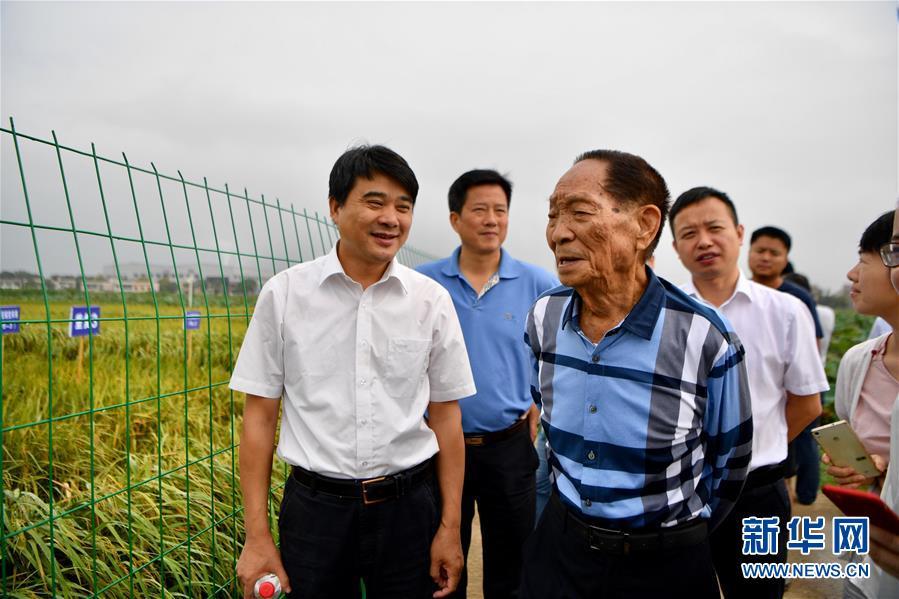 2017年9月29日,袁隆平(中)在位于湖南湘潭的低镉稻实验田边进行观测。 新华社记者 薛宇舸