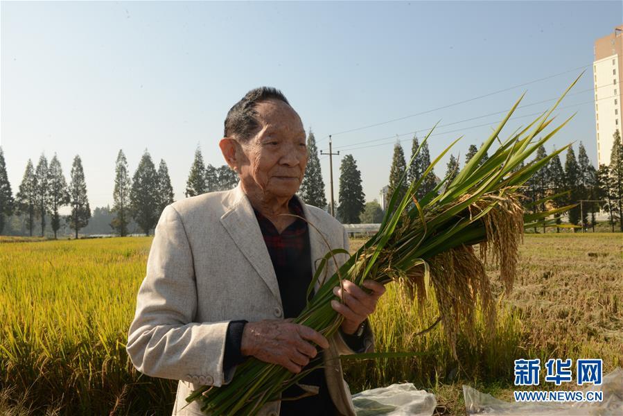 2018年10月30日,袁隆平在位于湖南长沙的第三代杂交水稻小区测产。 新华社发