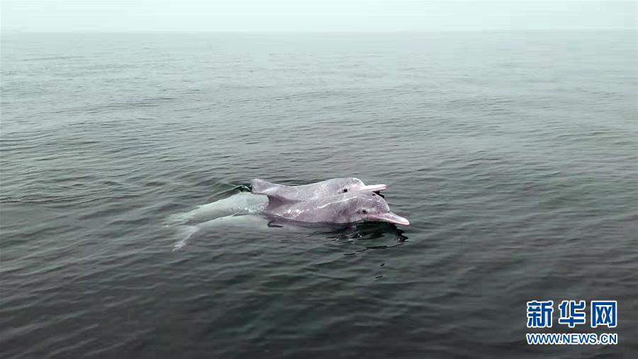 (壮丽70年 奋斗新时代——推动高质量发展调研行·图文互动)(9)近海能看鲸鱼白海豚,广西这片滨海旅游胜地啥来头?