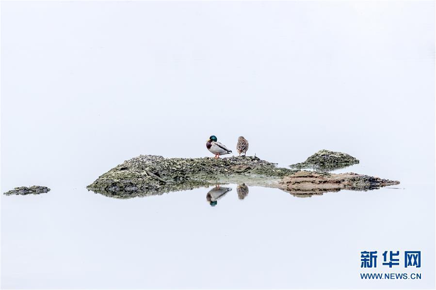 """(生態文明建設·圖文互動)(4)從亂河灘到""""鳥的天堂""""——一名攝影師鏡頭裏的""""生態變奏曲"""""""