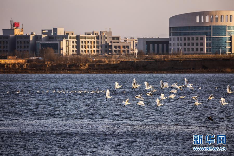 """(生態文明建設·圖文互動)(6)從亂河灘到""""鳥的天堂""""——一名攝影師鏡頭裏的""""生態變奏曲"""""""