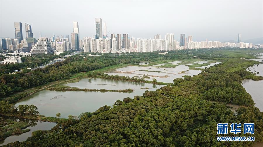 (在習近平新時代中國特色社會主義思想指引下——新時代新作為新篇章·圖文互動)(2)濕地就在城中央——珠三角重塑人與自然和諧共生圖景