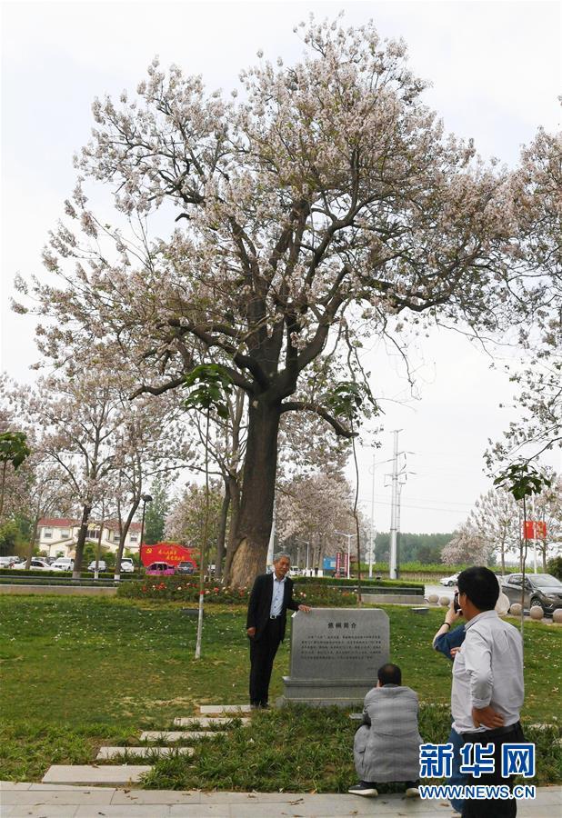 (壮丽70年·奋斗新时代·图文互动)(6)以改革创新实现县域新治——河南兰考县域治理样本观察