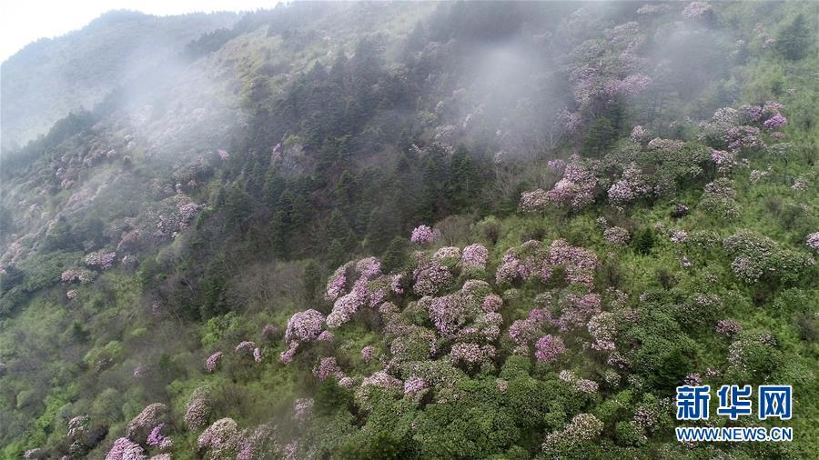 (壮丽70年·奋斗新时代·图文互动)(3)从开山伐木到全面保护——神农架国家公园的生态协奏曲