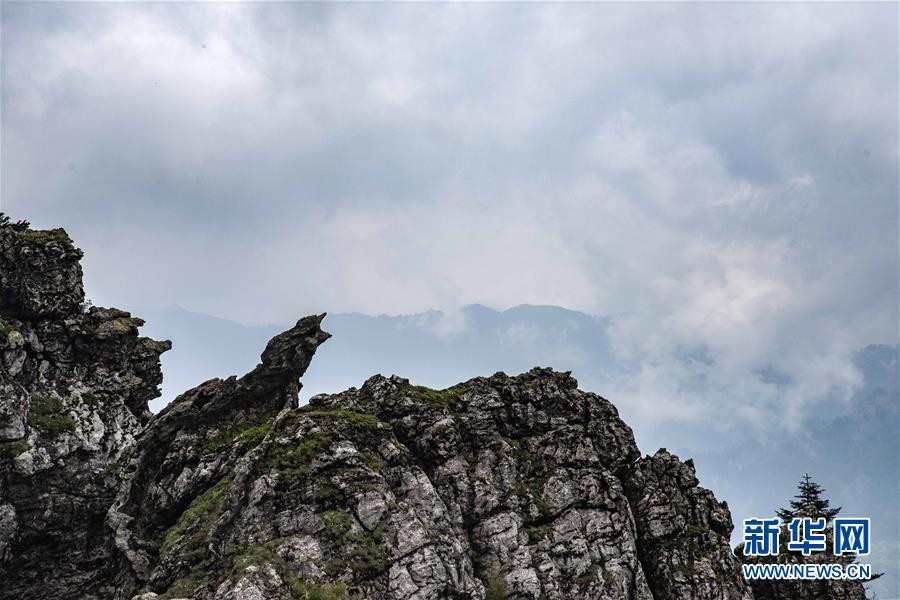(壮丽70年·奋斗新时代·图文互动)(2)从开山伐木到全面保护——神农架国家公园的生态协奏曲