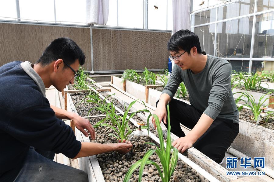 """(在习近平新时代中国特色社会主义思想指引下——新时代新作为新篇章·图文互动)(5)在绿色田野上书写青春答卷——几位""""新农民""""的返乡创业故事"""