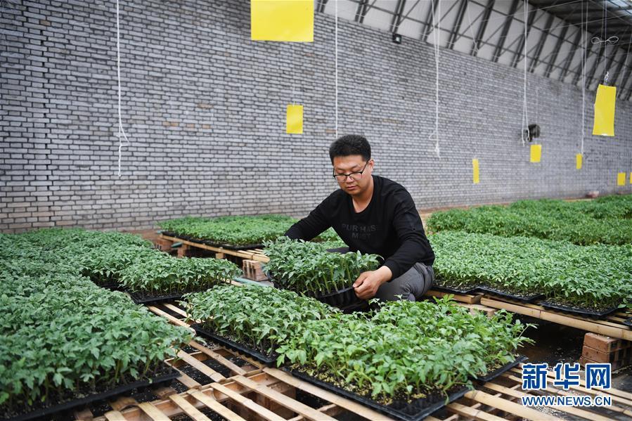 """(在习近平新时代中国特色社会主义思想指引下——新时代新作为新篇章·图文互动)(8)在绿色田野上书写青春答卷——几位""""新农民""""的返乡创业故事"""