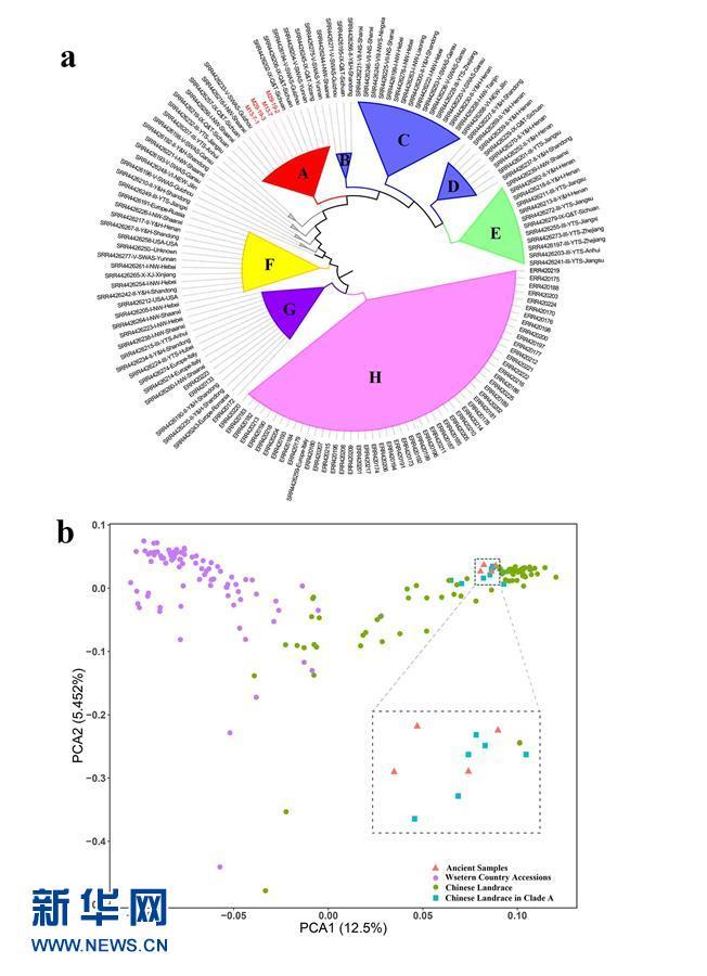 (图文互动)(1)中国科学家成功破译距今约3800年的古小麦全基因组