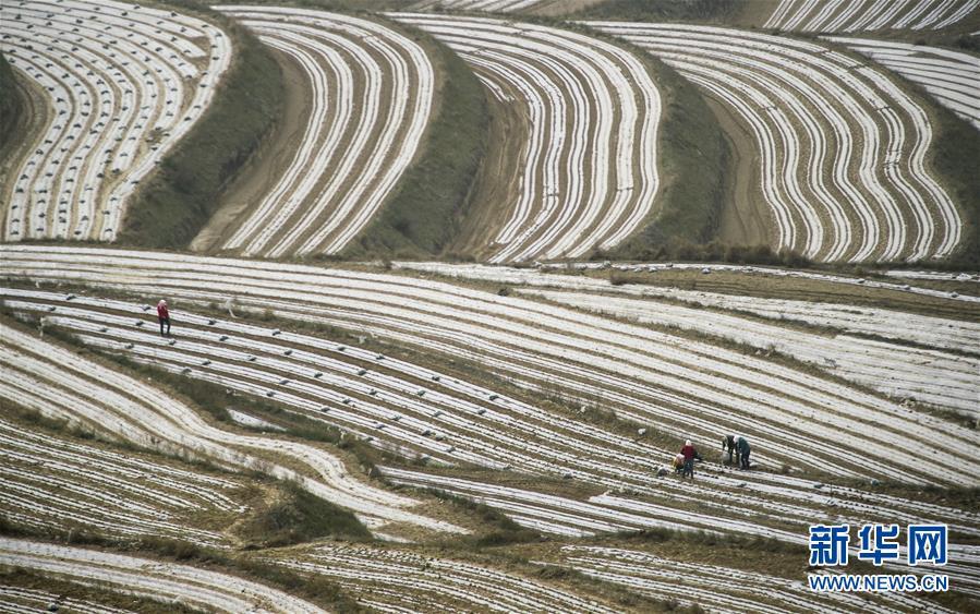(新华全媒头条·壮丽70年·奋斗新时代·图文互动)(7)中国减贫的西海固报告