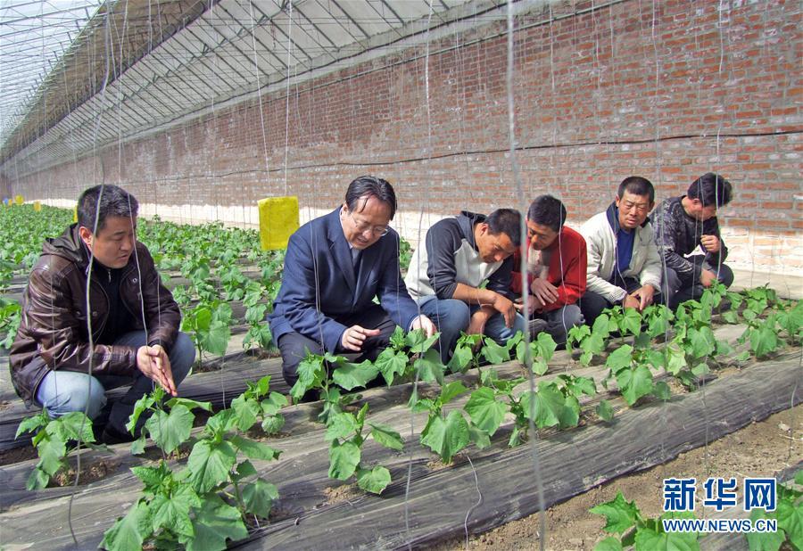 """(新华全媒头条·图文互动)(6)和蔬菜""""说话""""的人——中国工程院院士李天来的""""棚菜人生"""""""