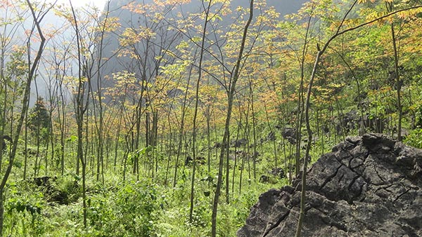 6年近8000万亩!退耕还林还草工程生态效益突显