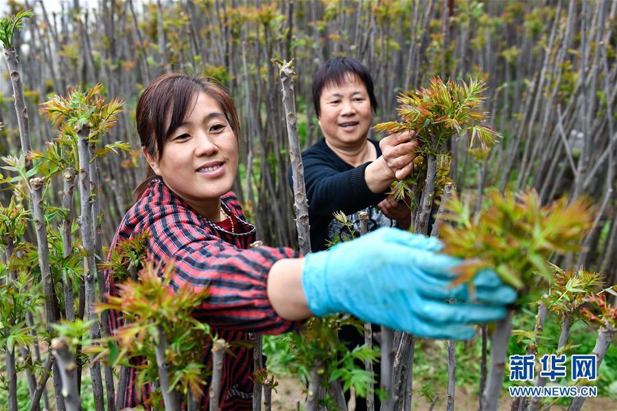 """(在习近平新时代中国特色社会主义思想指引下——新时代新作为新篇章·图文互动)(1)中条山下绿意浓——一个""""资源穷县""""的生态发展之路"""