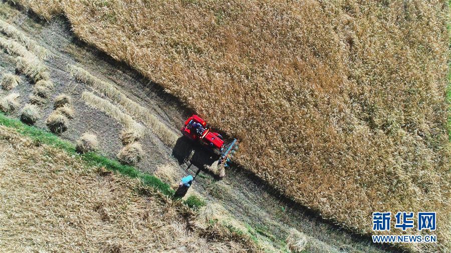 (壮丽70年·奋斗新时代——共和国发展成就巡礼·图文互动)(4)人间奇迹在高原——新中国成立70年西藏发展成就纪实