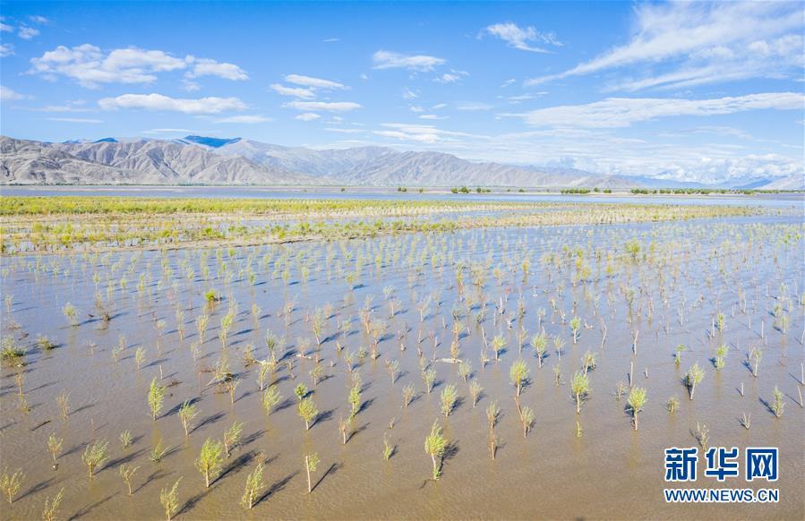 (壮丽70年·奋斗新时代——共和国发展成就巡礼·图文互动)(9)人间奇迹在高原——新中国成立70年西藏发展成就纪实