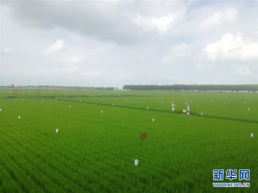 """(在习近平新时代中国特色社会主义思想指引下——新时代新作为新篇章·图文互动)(2)从""""靠天吃饭""""到""""看天管理""""——黑龙江创新气象为农服务体系观察"""
