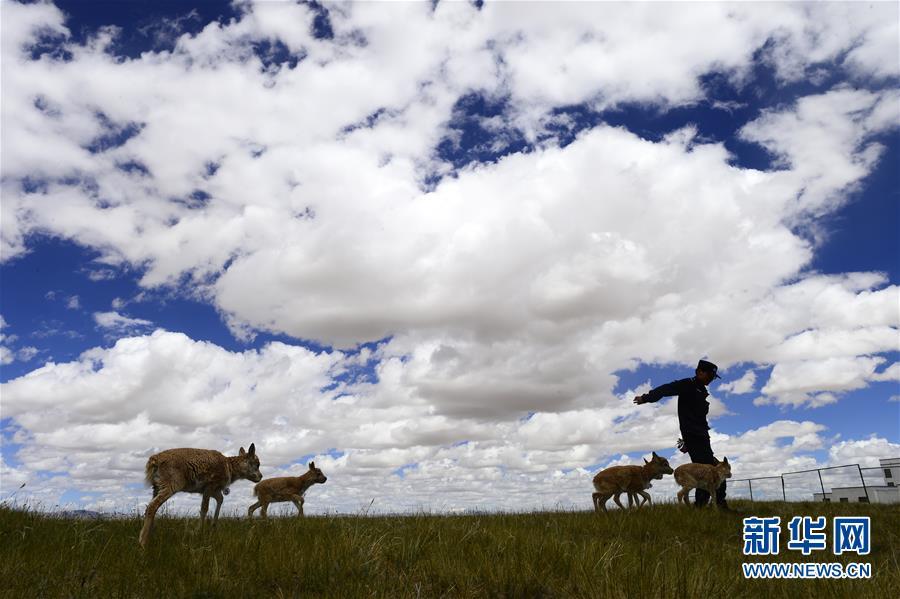 公益行动:新闻背景:我国自然保护地的过去、现在和将来