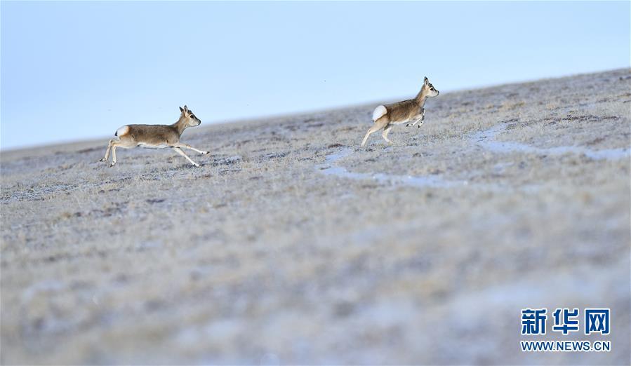 """(今日关注·第一届国家公园论坛·图文互动)(3)首个国家公园什么样?专家带你先""""睹""""为快"""